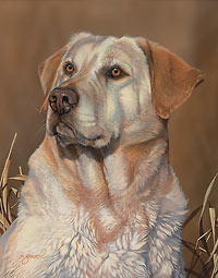 "Scot Storm Handsigned Open Edition:""Loyal Companion-Y. Lab"""