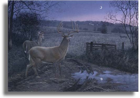 """Scot Storm Limited Edition Giclee on Paper:""""Autumn Encounter"""""""