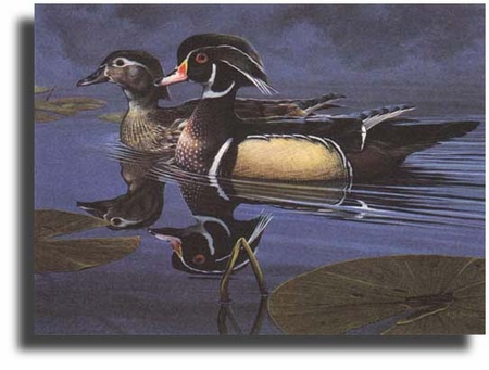 """Scot Storm Limited Edition Giclee on Paper:""""Wood Ducks"""""""