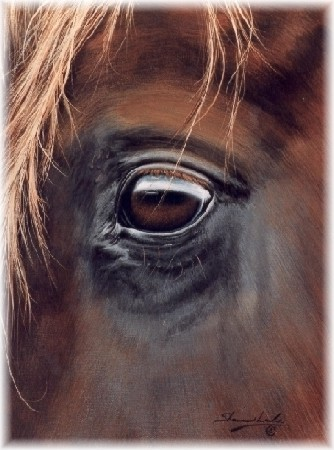"""Shannon Lawlor Handsigned and Numbered Limited Edition: """"Through Charlie's Eye"""""""