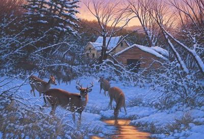 "Michael Sieve Limited Edition Giclee Print:""Evening Light—Whitetail Deer"""