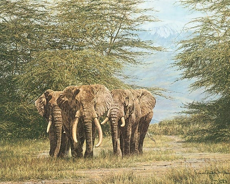 """Simon Combes Hand Numbered Limited Edition Print:""""Amboseli Ancients """""""