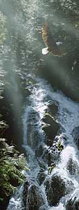 """Terry Isaac Handsigned and Numbered Limited Edition Giclee on Paper:""""Eagle Falls"""""""