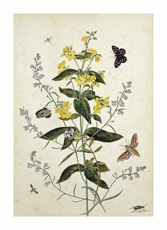 """Thomas Robins Jr. Fine Art Open Edition Giclée:""""Yellow Loosestrife and Other Wild Flowers"""""""