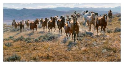 "Tim Cox Artist Signed Limited Edition Canvas Giclee:""Cow Horse Country"""