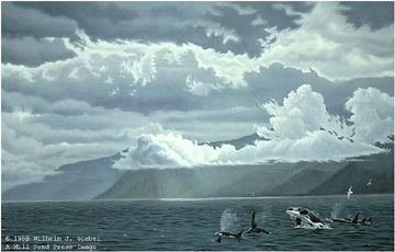 """Wilhelm Goebel Limited Edition Paper Print:""""Straight Course - Orcas"""""""
