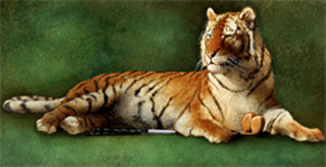 "Will Bullas Fine Art Open Edition Watercolor Paper :""Tiger's Woods"""