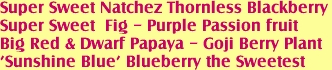 Super Sweet Natchez Thornless Blackberry<BR>Super Sweet  Fig - Purple Passion fruit <BR>Big Red & Dwarf Papaya - Goji Berry Plant<BR>'Sunshine Blue' Blueberry the Sweetest
