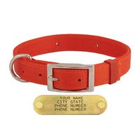 shop CLOSEOUT -- 1 in. Field-Grade Treated Nylon D-End Dog Collar