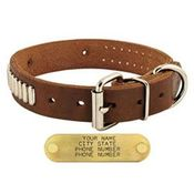 shop 1 in. Bully Leather Studded Dog Collar