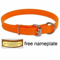 shop 3/4 in. Day Glow D-End Puppy / Small Dog Collar