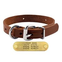 shop 3/4 in. Leather D-End Puppy / Small Dog Collar