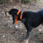 shop Astro 900 T9 Collar on Hound