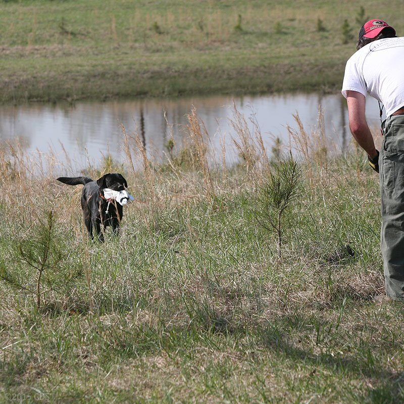 Attendee with Dog retrieving