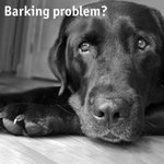 Bark Collars Stop Dogs from Barking