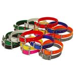 shop Beagle 3/4 in. Field Trial Dog Collar Combo Pack