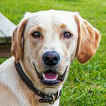 shop Bert's Dog Butters (Labrador Retriever)