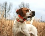 shop Bird Dog Owner Gift Ideas