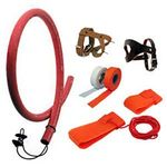 shop Bird Harnesses and Restraints for Quail, Pheasant, and Pigeon