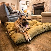 buy  NEW Bizzy Beds™ Dog Beds with Zipper
