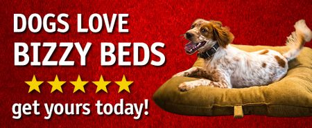shop See why dogs love Bizzy Beds!