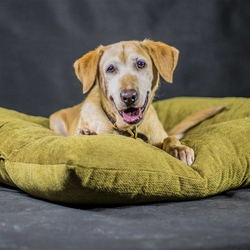 shop Bizzy Dog Bed -- Extra Large