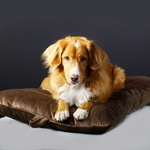 shop MEDIUM Bizzy Beds® Dog Beds
