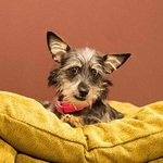 shop SMALL Bizzy Beds® Dog Beds