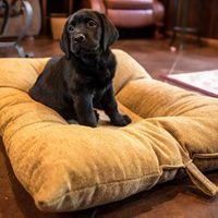 buy  MEDIUM Bizzy Beds® Dog Beds