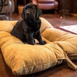 shop MEDIUM Bizzy Beds® Dog Beds with Zipper