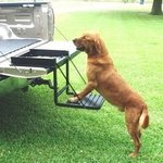 shop Black Truck 'n Buddy Dog Step