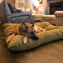 shop BLOWOUT SALE -- JUMBO Bizzy Beds® Dog Beds with Zipper