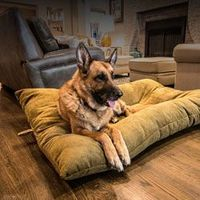 buy  BLOWOUT SALE -- Bizzy Beds® Dog Beds with Zipper