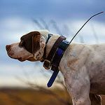 shop BUYER'S GUIDE: Read this before you buy a tracking collar!