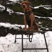 """shop Customer Photo: Mike Nadolski 's dog Cresthill's Honker in The Wind """"Goose""""  with the Final Stand"""