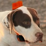 shop Delta Upland XC on Dog