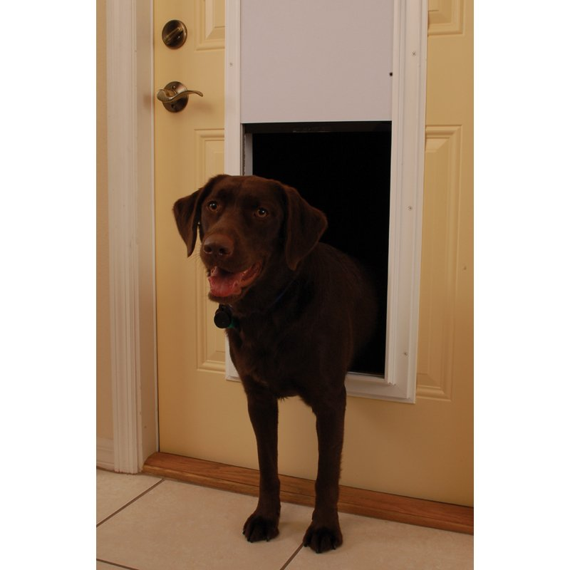 Mopix Dog Entering Through Plexidor Automatic Dog Door