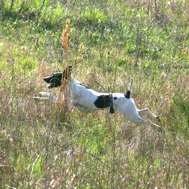 Dog retrieving bird