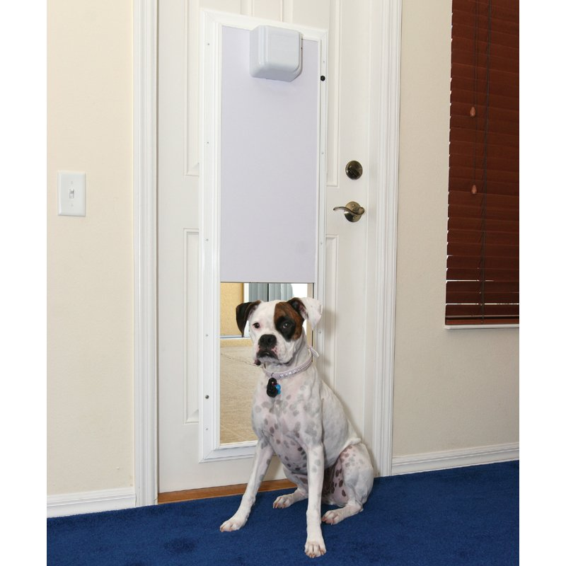 Mopix Dog Sitting Beside Plexidor Automatic Dog Door