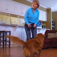 shop Dog Tricks: How to Teach Your Dog to Walk Backwards