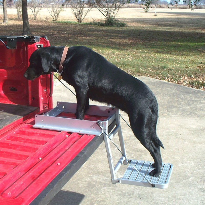 Dog Using Truck 'n Buddy 2001