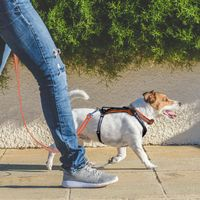 buy  Ultimate Dog Walking Kits