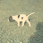 shop Dutchess (English Pointer)