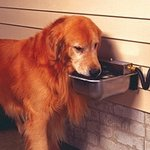 shop FAQ -- Automatic Dog Waterers