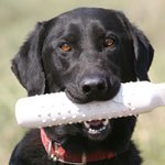 buy  FAQ -- Retrieving Dummies and Dog Bumpers