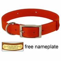shop ORANGE Scott Field-Grade Treated Nylon D-End Dog Collar