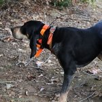 shop Garmin Astro T5 Collar on a Hound
