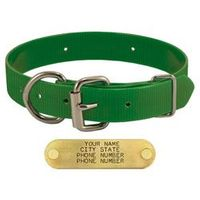 shop GREEN 1 in. Day Glow D-End Collar