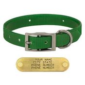 shop GREEN 1 in. Day Glow Standard Collar