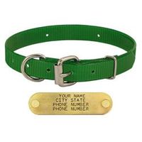 shop GREEN 3/4 in. D-end Day Glow Collar